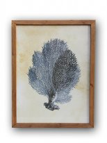 Picture blue coral (ref.2), seaside decor, Chehoma